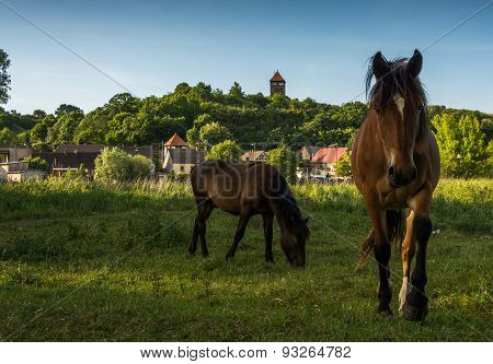 horses in the countryside