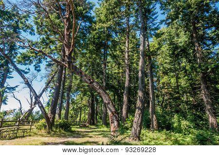 Curving Tree
