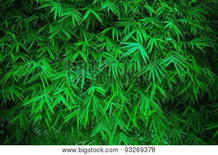 green leaves of bamboo plant