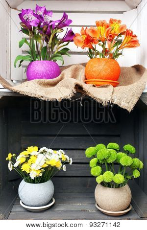 Beautiful flowers in pots in wooden crate