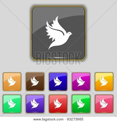 Dove Icon Sign. Set With Eleven Colored Buttons For Your Site. Vector