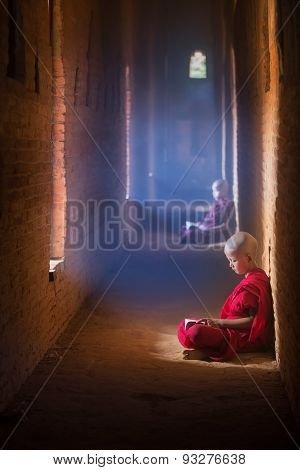 Young Buddhist Monk Reading And Study