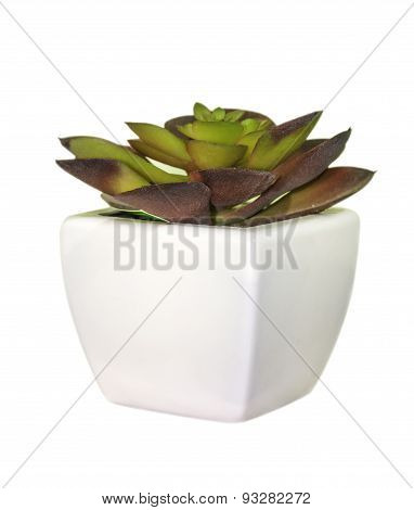 Young Plant In Jardiniere On White Isolate Background.