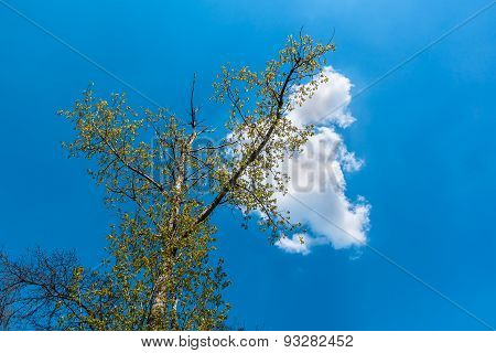 White Cloud Sitting On A Tree