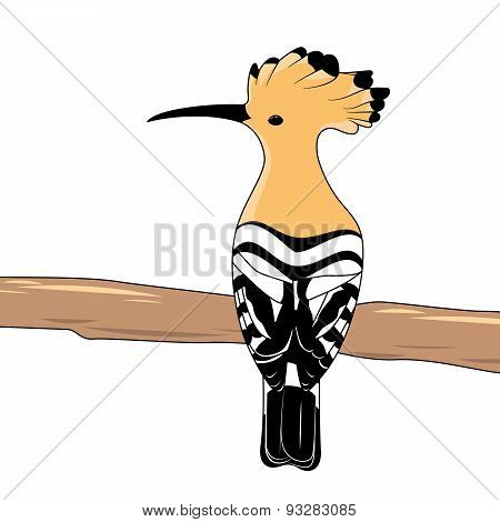 Hoopoe sitting on a birch