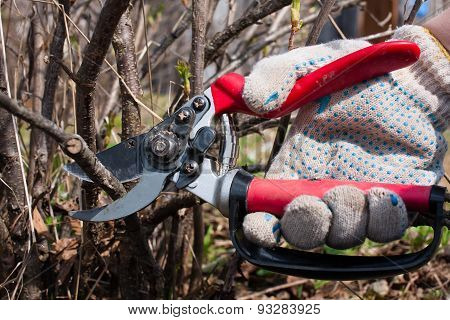 Secateurs In Hand