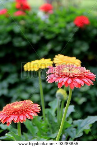 Pretty image of colorful flowers in garden