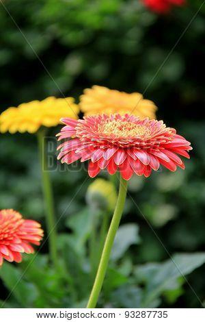 Colorful petals of seasonal flowers in backyard garden