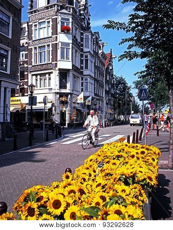 Sunflowers and cyclist, Amsterdam.