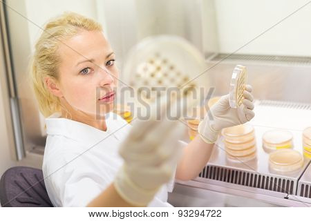 Scientist observing petri dish.