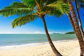 stock photo of palm  - Single palm tree at Palm Cove beach in north Queensland - JPG