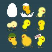 stock photo of baby chick  - Set of yellow chicks - JPG