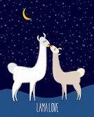 picture of lamas  - Llama Alpaca - JPG