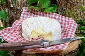 stock photo of wood pieces  - Camembert cheese on a piece of wood with table knife - JPG