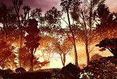 pic of vegetation  - 3D illustration of a wood landscape with vast vegetation in an reddish atmosphere - JPG