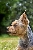 foto of stare  - Yorkshire staring into the distance in the garden - JPG