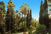 picture of long winding road  - Walkway in a beautiful Park with Palms and thuyas - JPG