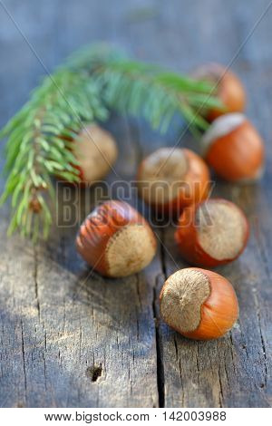 Hazelnuts on old wood table, close up