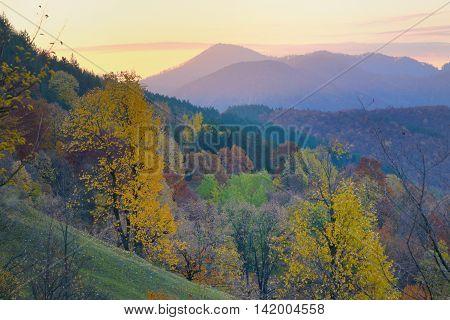 birch forest in sunny morning autumn, season