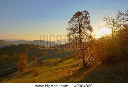 birch forest in sunny morning autumn, season specific