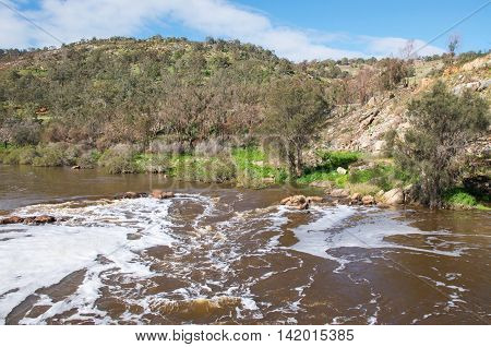 Lush greenery and rushing waters at the Bell Rapids of the Swan and Avon River intersection in the Swan Valley in Western Australia.