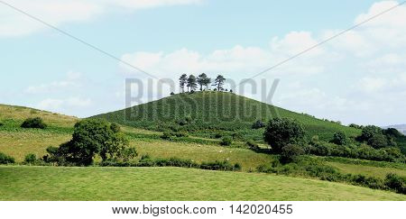 Colmer's Hill near village of Symondsbury in Dorset England