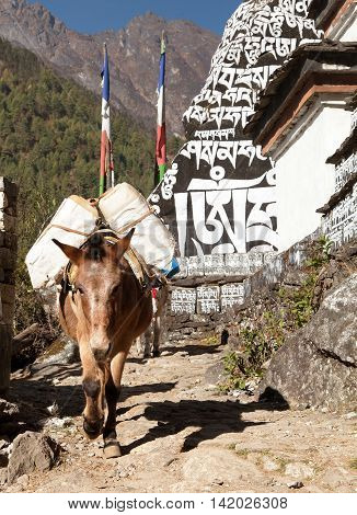 Buddhist prayer mani walls and mule khumbu valley way from Lukla to Namche Bazar Nepal