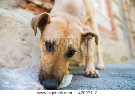 Sad lonesome stray dog eats junk food