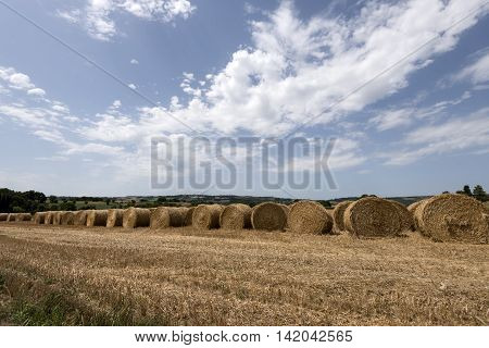 hay and straw bales piles it the countryside