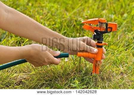 hands installing sprinkler for irrigation of lawn