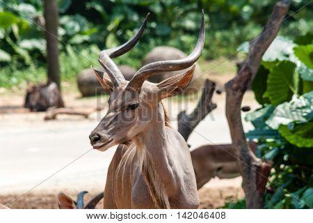 Wild antelope posing in her natural environment