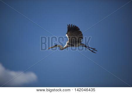 Flying Egret On A Blue Sky Background.