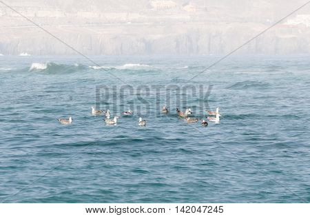 Seagulls In The Water