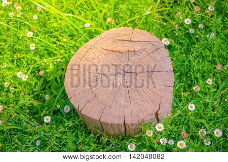 Close up of Stump tree on green grass with flower