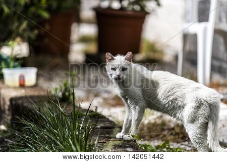 beautiful white cat in a garden closeup