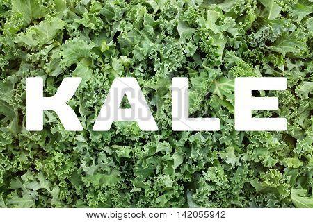 Kale Text Over Shredded Kale Leaves Background
