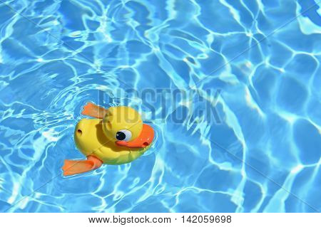 Yellow rubber duck in the home pool in the summer.Summer background for traveling and vacation.
