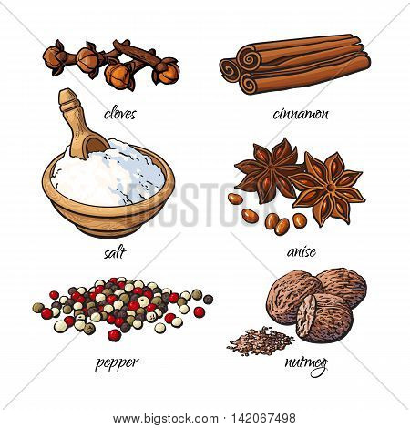 Set of spices - cinnamon, pepper, anise, nutmeg, salt, clove, isolated sketch style illustration on white background. Traditional cooking spices in Asian and Indian cuisine