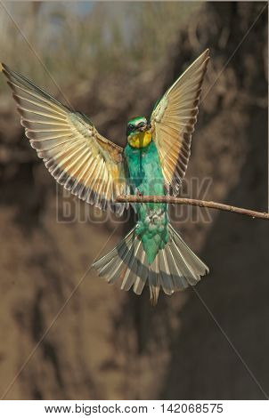 beautiful birds with bright plumage are sitting on the branches of trees