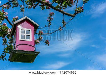 Steel bird feeder house in apple tree, blue sky.