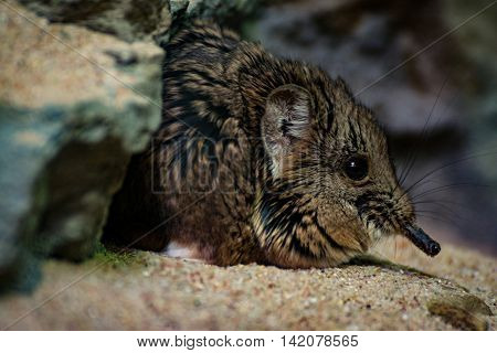 Small Rodent Sand Glass Cage Laying Ground Rock