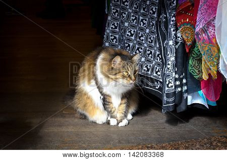 beautiful cat observes the people passing in front of an entrance of a shop in istanbul