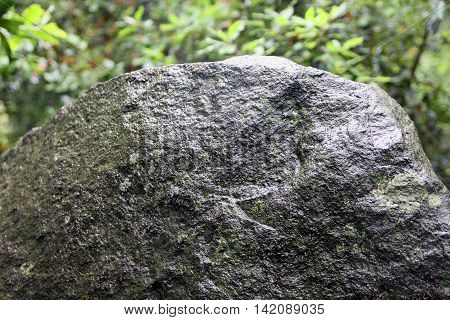 big wild natural grey wet stone diabase with green patina and moss and lichen foreground closeup in Crimean green forest