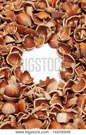 cracked hazelnut shells