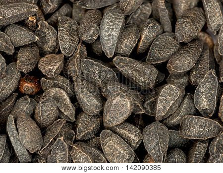 Close up of some black Nigella seeds