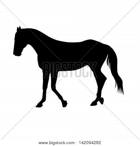 Vector Horse Silhouette Isolated on a White Background