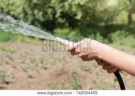 water from a hose for watering the plants growing in the garden / manual watering with a hose