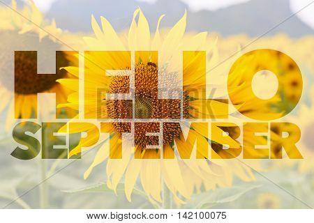 Hello September word on sunflower nature background