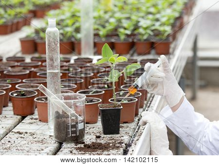 Biologist Testing Growth Of Sprout