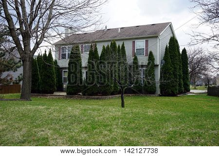 A home in Joliet, Illinois is surrounded by arborvitae (Thuja occidentalis) plants.